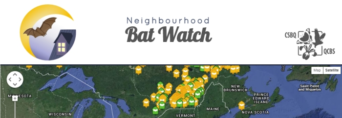Neighbourhood Bat Watch